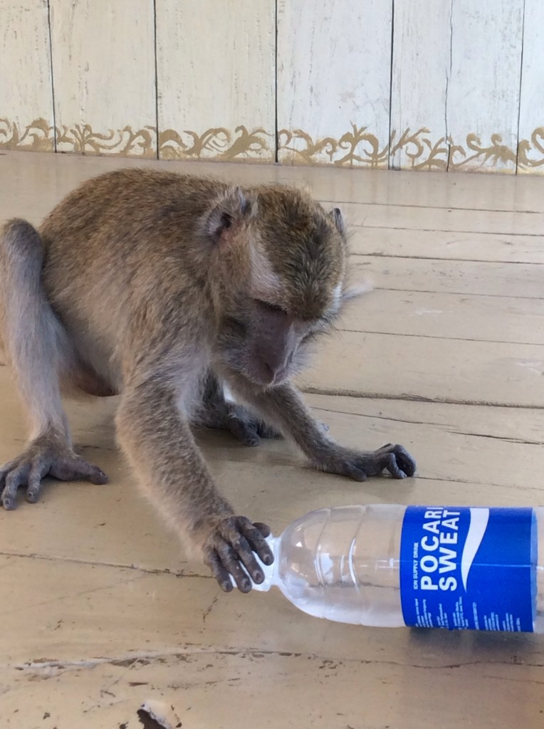 I felt much more frightened of the local Macaques  who preyed on the tourists!