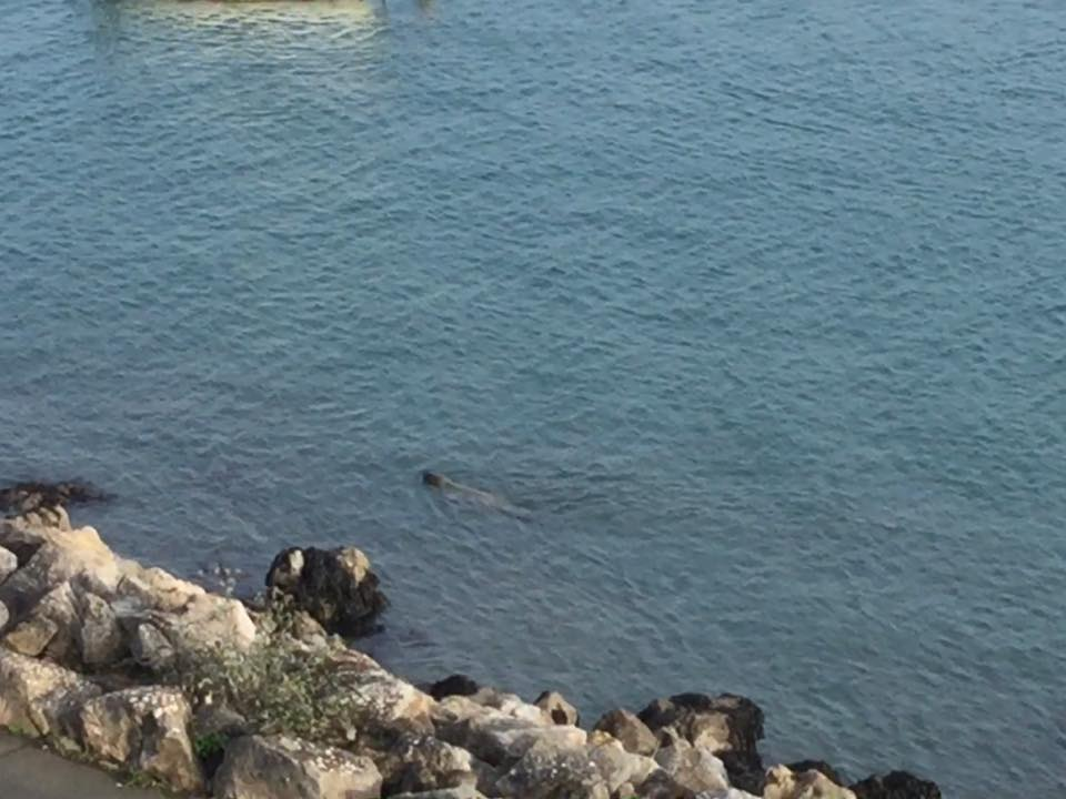 I love watching the seals as they swim by searching for scallops